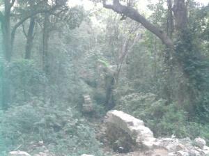 A deep forest.